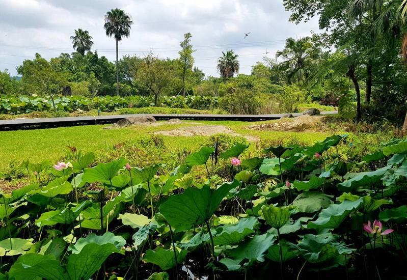 桃園大溪區的山豬湖生態親水園區13日迎來微解封,將適度開放入園參觀。圖/桃園市水務局提供