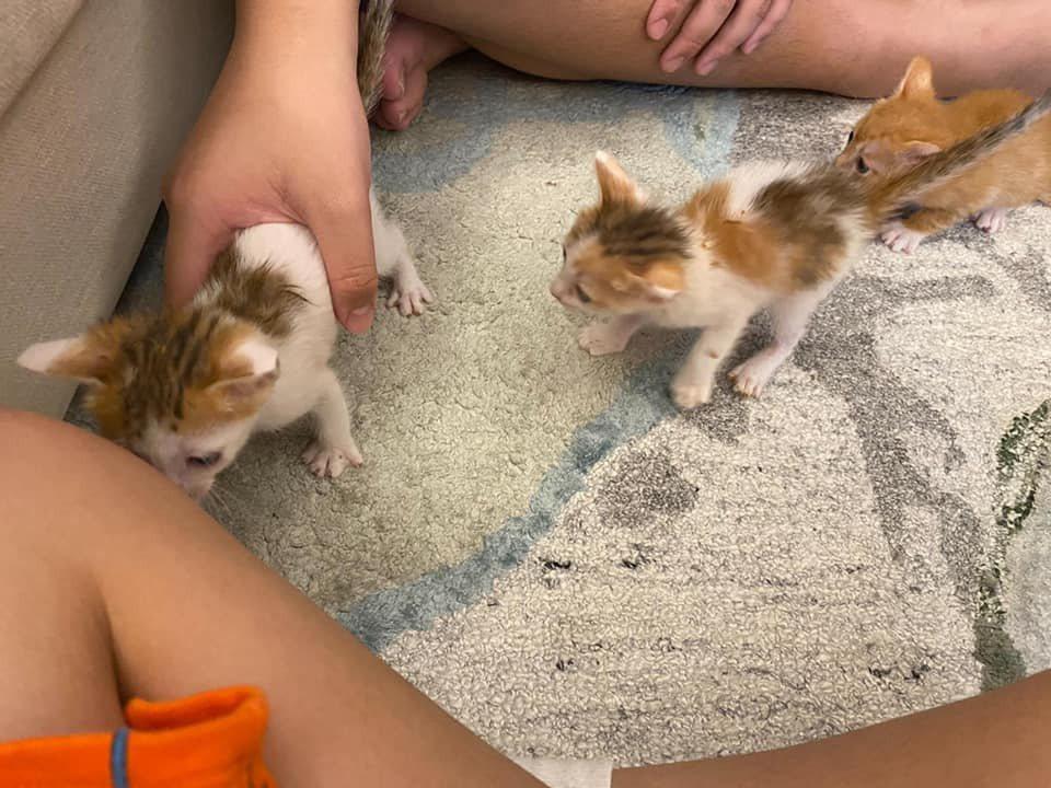 小貓們在郁方家備受寵愛。圖/摘自臉書