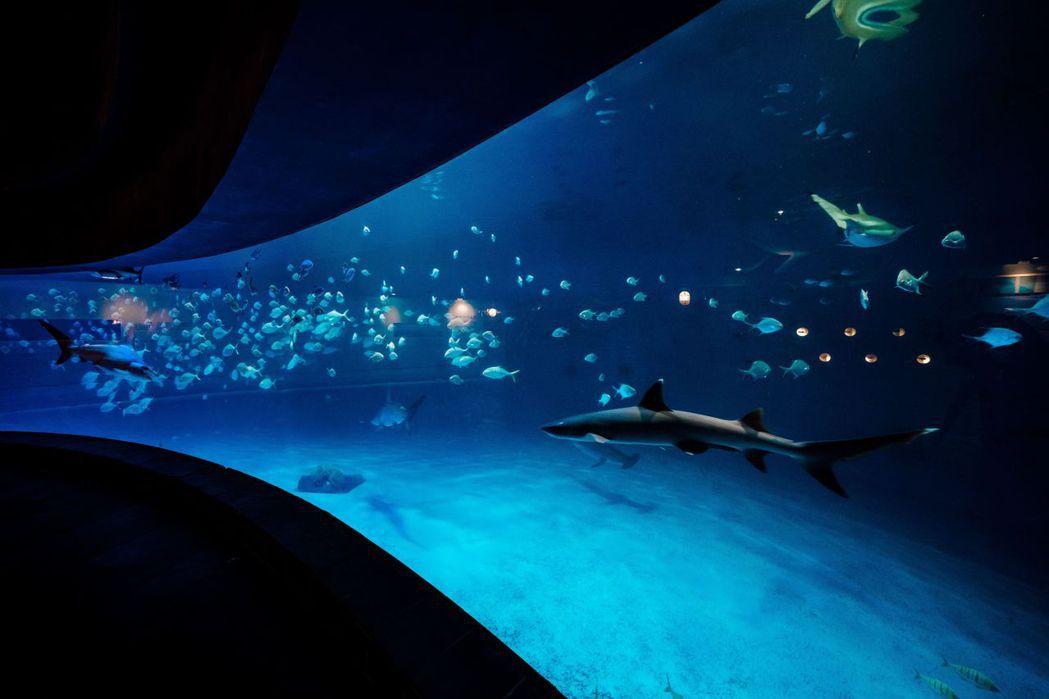 鯊魚特展。  屏東海生館/提供