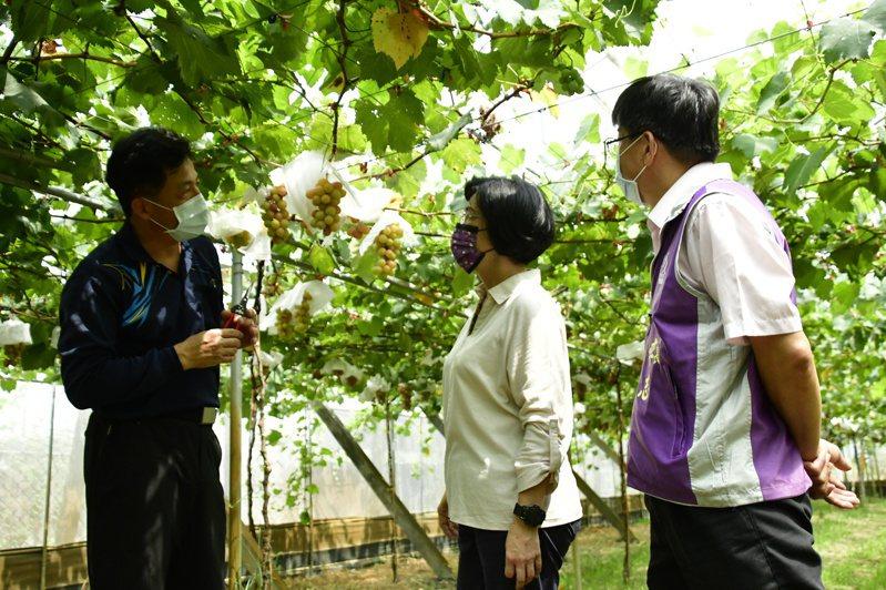 彰化縣長王惠美近日密集拜訪休閒農場,了解業者經營現況。記者簡慧珍/攝影