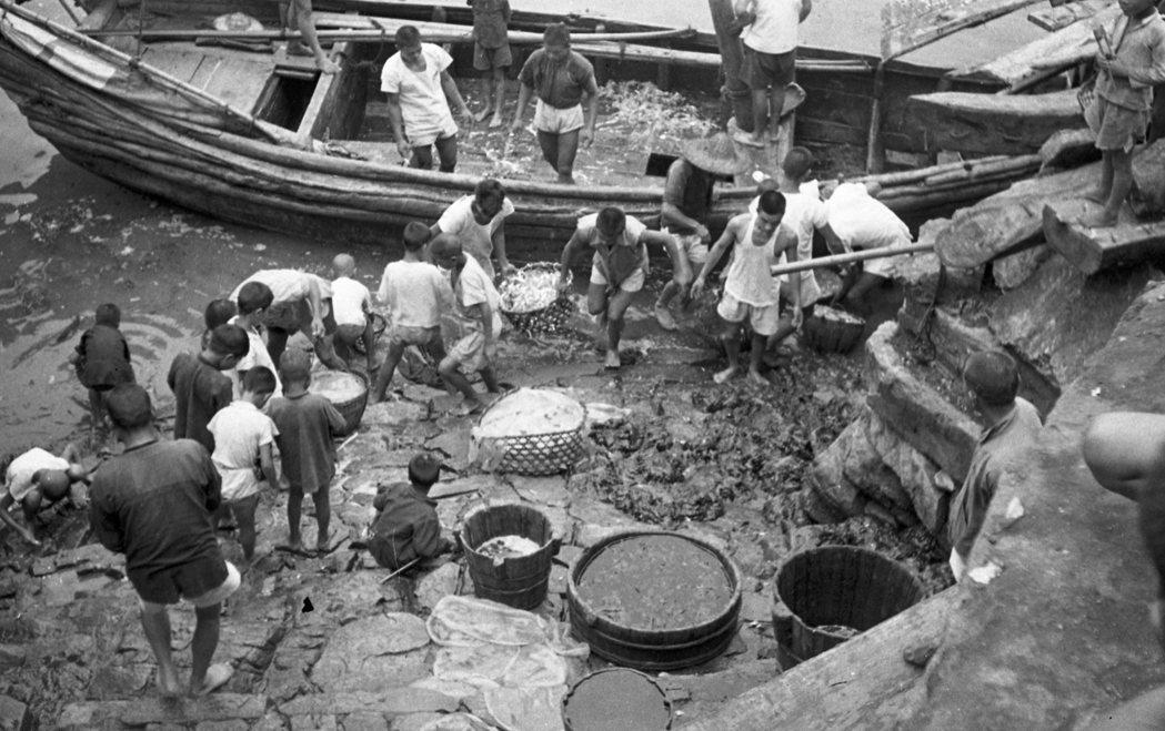 1954年8月,大陳島撤退前一年,居民在戰火下生活,扛著一簍簍漁獲上岸。 圖/聯合報系資料照