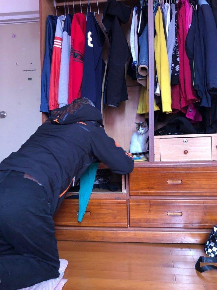 父親趁女兒不在家時,偷偷跑到女兒房間趴跪在衣櫃上與貓咪互動。(翻攝自Dcard)