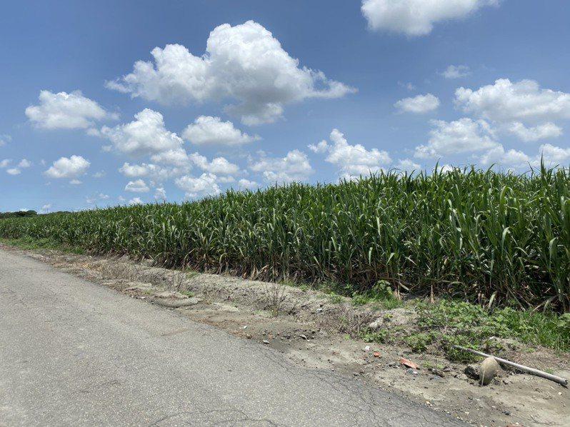 褒忠產業園區預定地目前仍是台糖農場,將來一旦開發成功,引進台商可帶動地方工業發展。記者蔡維斌/攝影