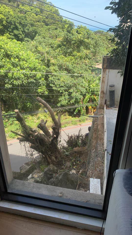 陸元琪家的榕樹被新鄰居砍掉。 圖/擷自陸元琪臉書