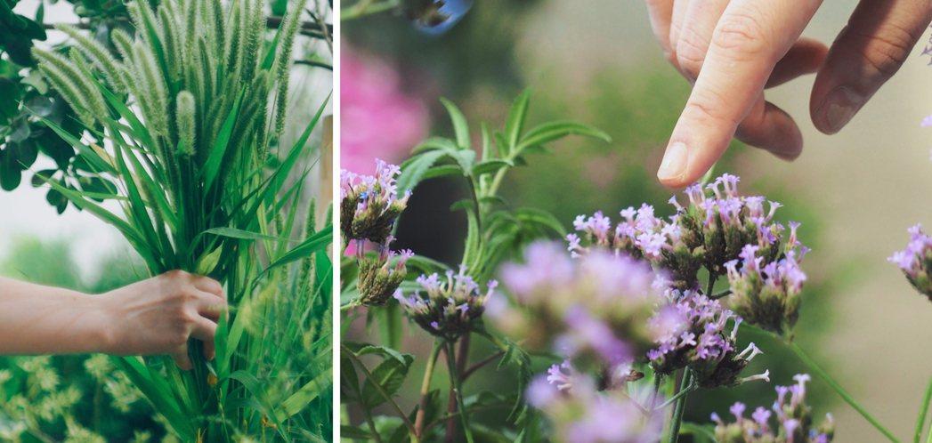 花藝師張芝伊從花藝出發,輔以園藝治療,將大自然帶入生活日常,藉由植物讓每個人感知...