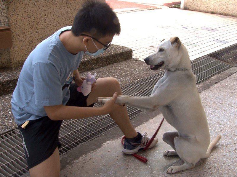 瑞芳區鼻頭國小二代校犬AKI個性也更聽話、顧家,希望讓狗狗AKI能成為學校生命教育及陪伴師生的可愛吉祥物。 圖/觀天下有線電視提供