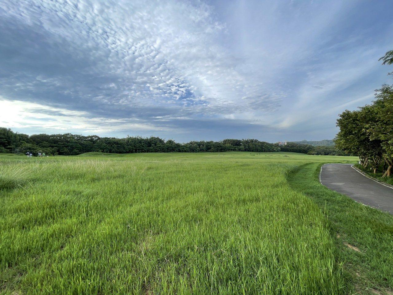青青草原擁有大片草地,是拍婚紗的熱門場地之一。 圖/張裕珍 攝影
