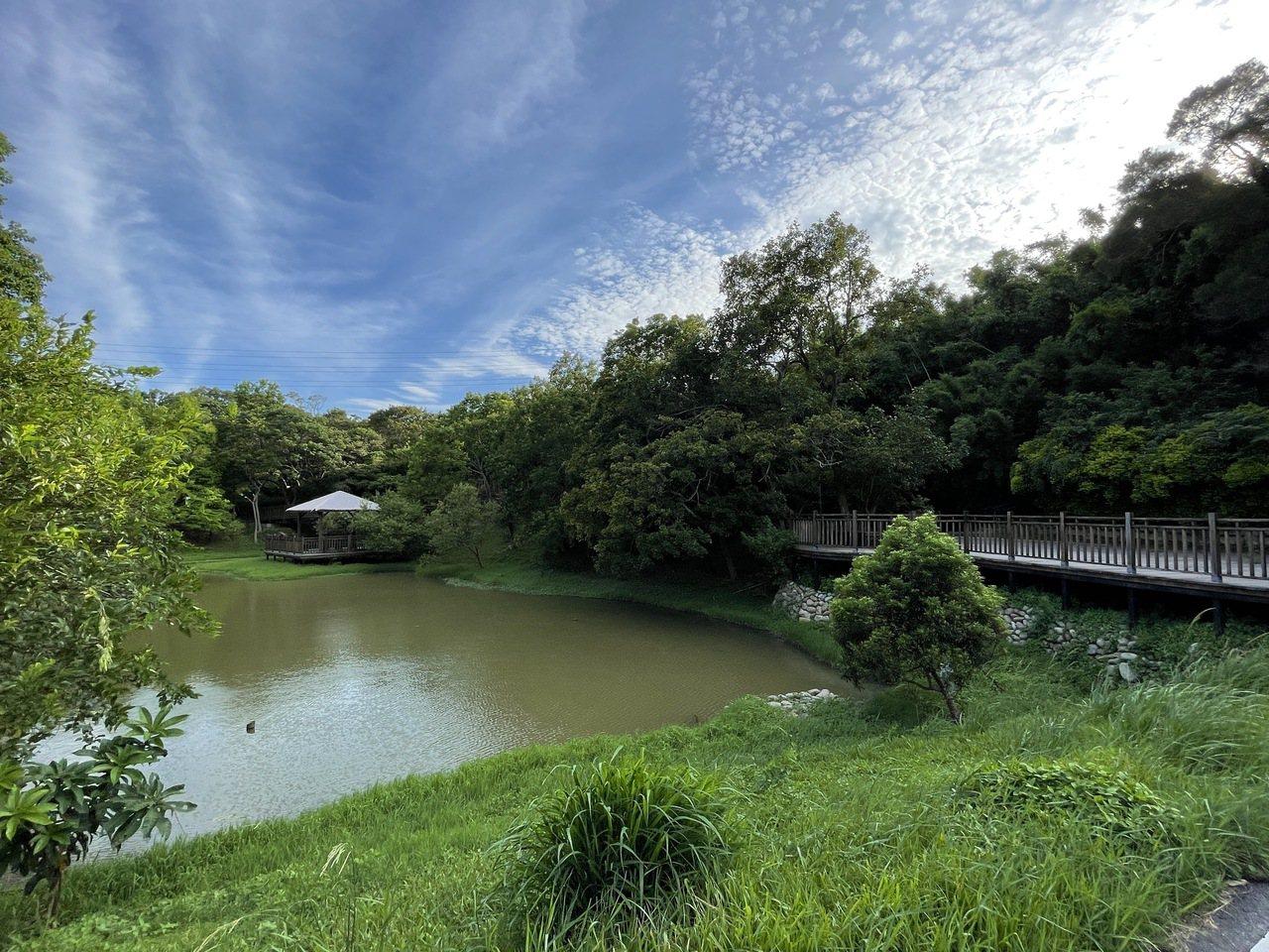 青青草原環境舒適,生態池旁有休憩平台與座椅,方便賞景。 圖/張裕珍 攝影