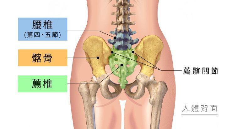 腰薦髂複合體結構圖。 圖/菁英診所 提供