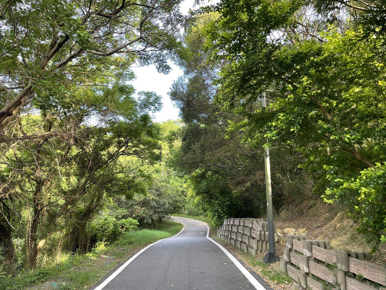 青青草原周邊步道平緩,兩側綠樹成蔭,走起來相當舒適。 圖/張裕珍 攝影