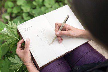 室外植繪,從「田野速寫本」開始:8個步驟,持續練習,掌握植物最美姿態