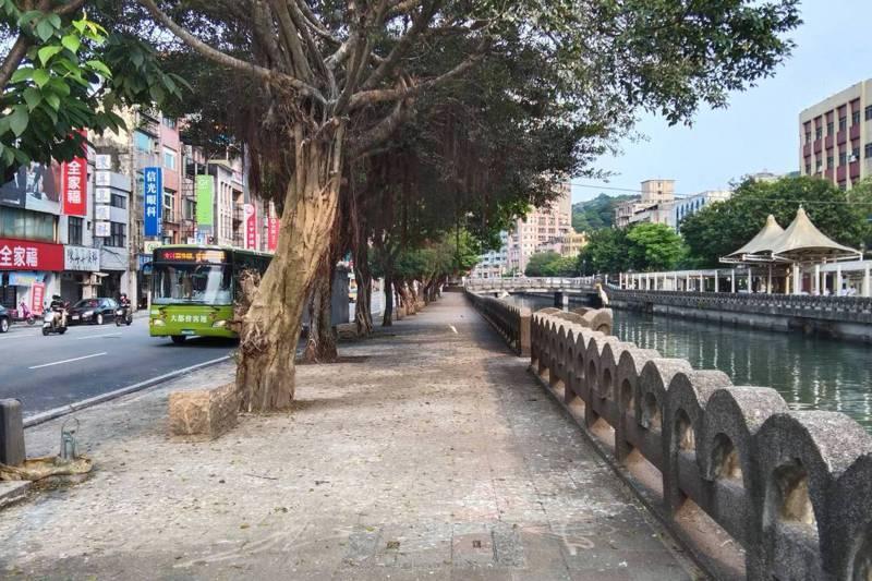 基隆市田寮河金雞橋旁的行道樹吸引鷺科鳥類築巢繁殖,地面滿是鳥屎滴落痕跡。記者邱瑞杰/攝影。