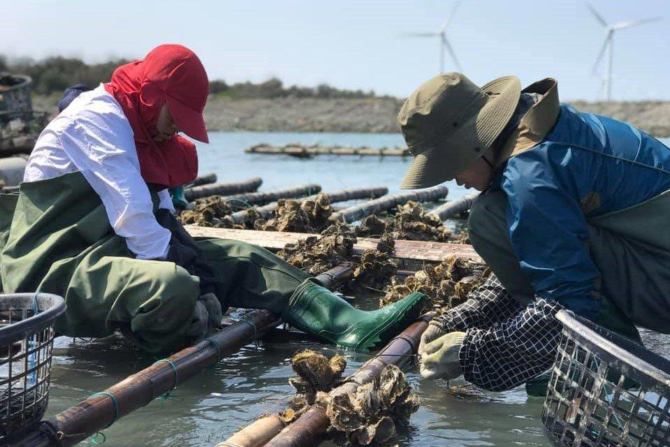 蚵農的工作情況。 圖/幸福果食 提供