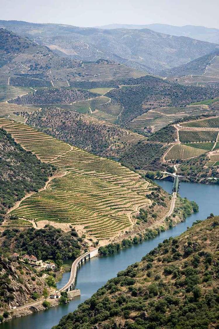 波特酒產區葡萄牙北部多羅河流域的葡萄園,隨山巒起伏蔓延至河邊。圖/摘自多羅河波特...