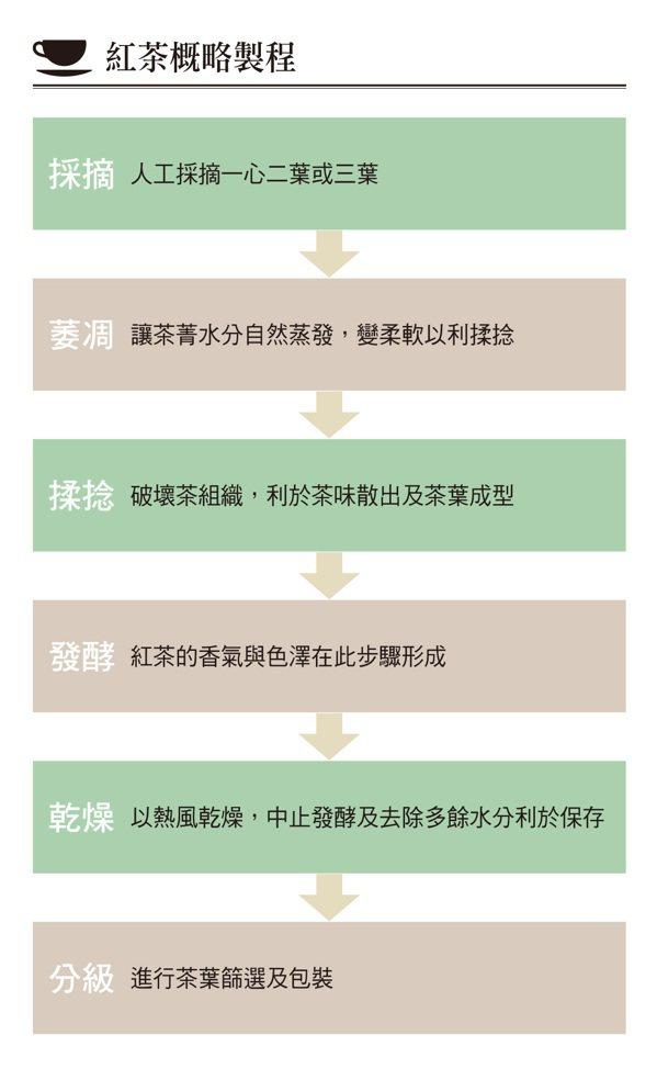 最傳統紅茶的製程約略可分為:採摘→萎凋→揉捻→發酵→乾燥→分級,共六個階段。 圖...