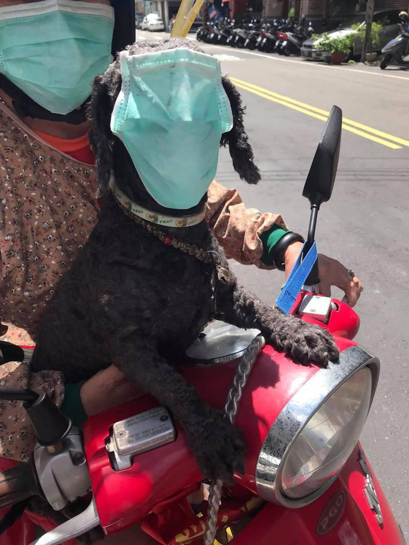 有網友貼出路上一名婦人幫寵物狗配戴口罩的照片,引發熱議。 圖擷自facebook