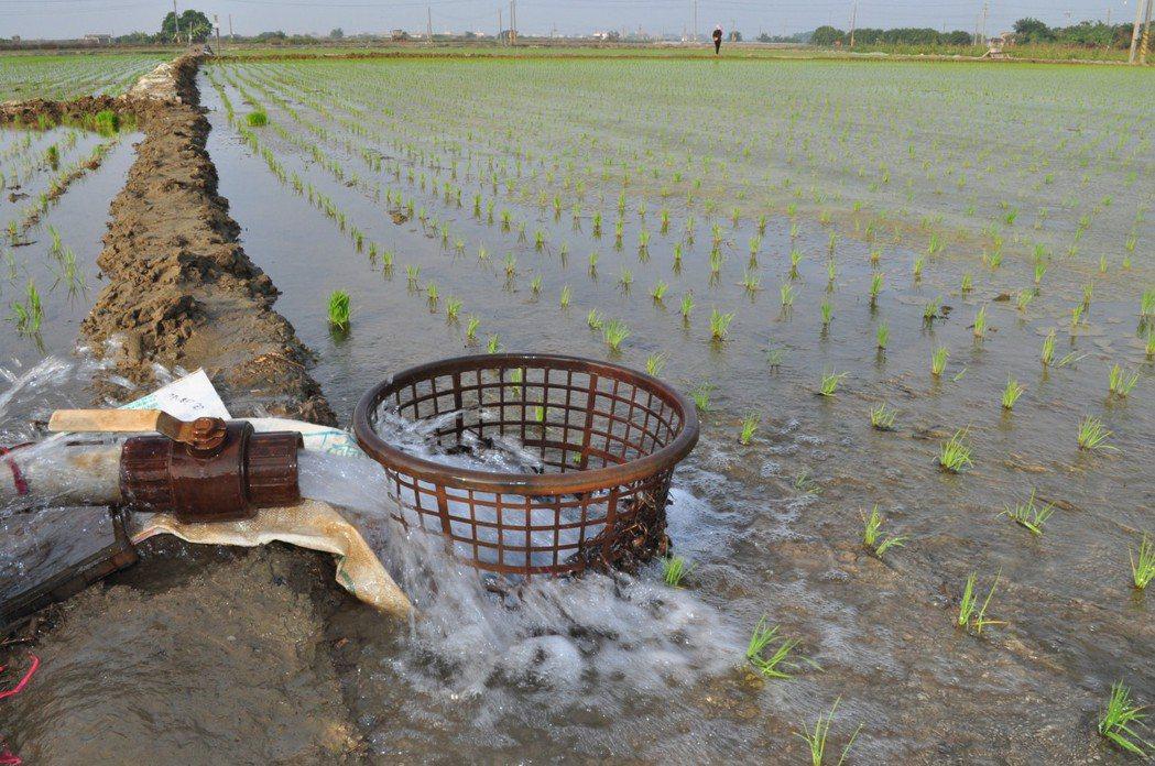 水稻插秧後初期應維持適當水位。