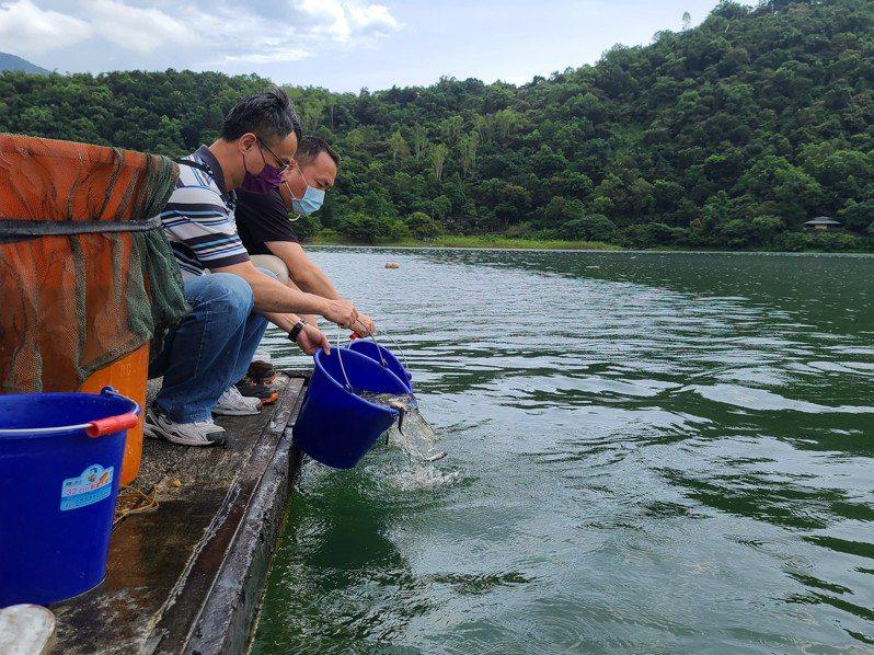 花東縱谷國家風景區管理處委託東華大學,今天放流3000尾白鰱魚苗,以食物鏈生物防治方式改善鯉魚潭水質。圖/縱管處提供