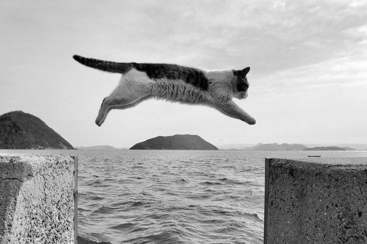 熱愛拍貓、去年也以貓咪照獲獎的吳佳芳,拿著iPhone X以連拍功能捕捉到日本香...