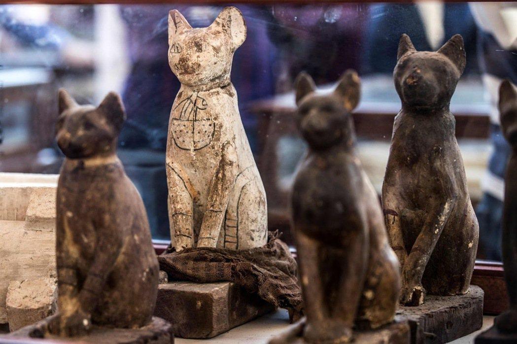 2019年展出的古埃及貓。 圖/法新社