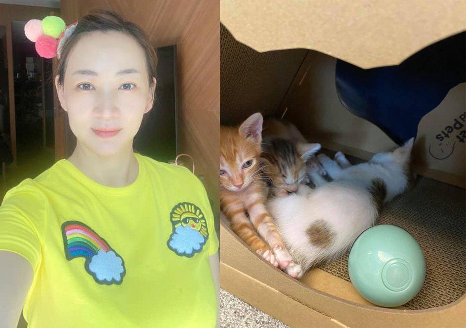 郁方一家早前撿到3隻幼貓。圖/擷自臉書