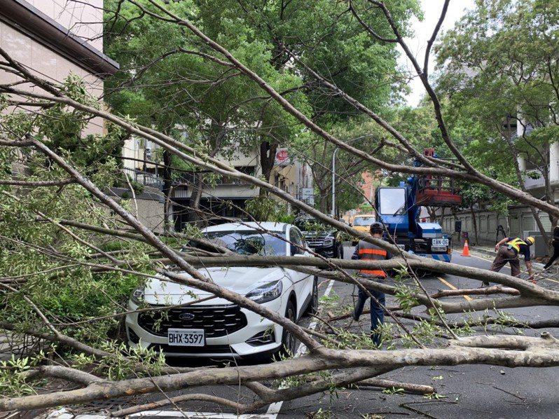 台南市中西區忠義路家齊高中旁的光臘樹路樹倒塌橫躺道路上,致該路段交通中斷,所幸無人傷亡。記者邵心杰/翻攝