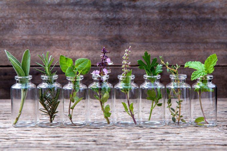 許多廚房就有的香草,對身體益處多多。圖/123RF