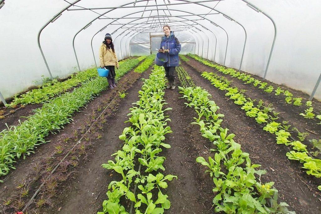 許多國外非營利組織,為了推廣有機農業與友善環境理念,會媒合有興趣的青年到農場以勞...