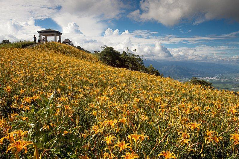 花蓮六十石山金針花,夏季正好遊。圖/可樂旅遊提供