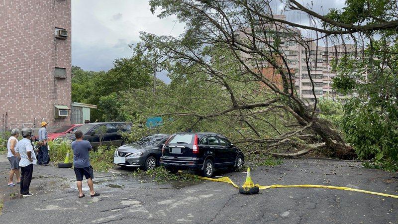 基隆深澳坑路大樹倒砸5車,私人土地恐只能自認倒楣。記者游明煌/翻攝