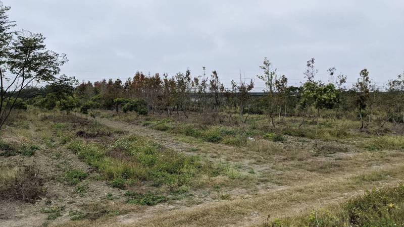 高雄中崎有機農場因橋科進駐面臨搬遷,將遷移到燕巢台糖農場,高雄市農業局表示,目前正在遷移基地內樹木,以利後續開闢計畫。圖/高雄市農業局提供