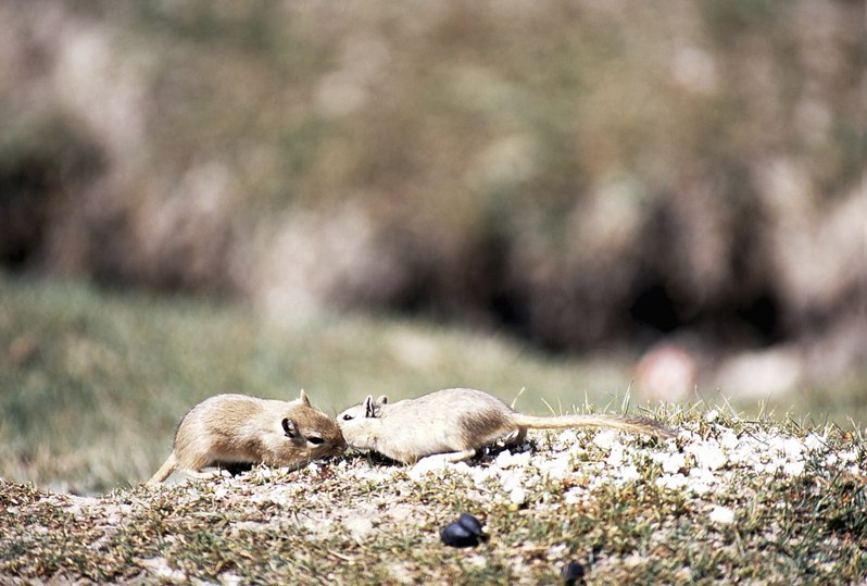 一女子公園散步遭到一堆老鼠爬上身啃咬。示意圖。圖片來源/ingimage