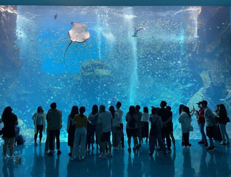 福爾摩沙透明巨型水族箱位於二樓,疫前一直是人氣亮點。圖/編輯葉穎樂攝