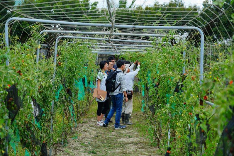 因橋科將進駐,中崎有機農業專區面臨搬遷。圖/地球公民基金會提供