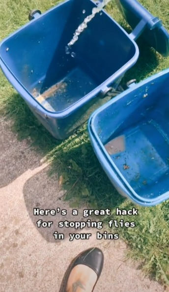 網友曝「鹽巴」能除垃圾桶裡的蒼蠅。圖/取自tiktok@sisterpledgecleans