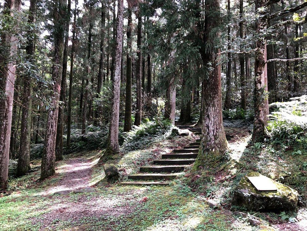 漫步桃園東眼山國家森林遊樂區整齊美麗的柳杉林,呼吸芬多精,展開最舒心的森林浴之旅...