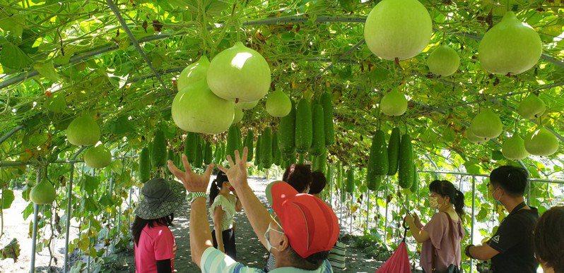 中社花市目前有各種瓠瓜。記者游振昇/攝影
