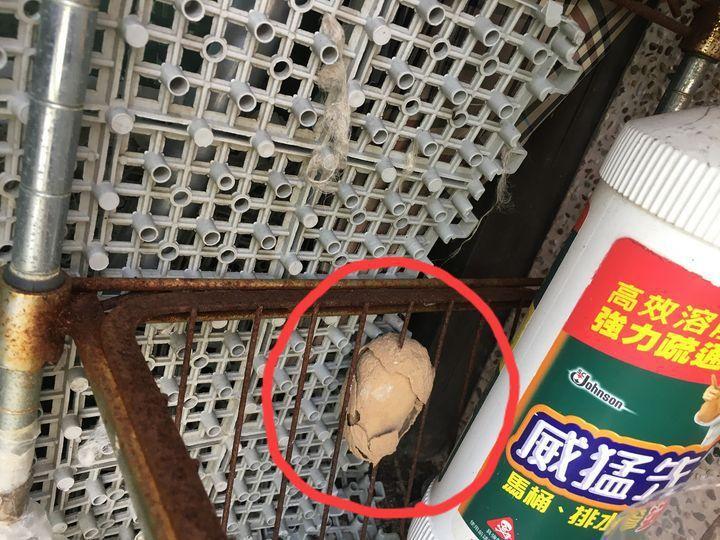 一名網友貼出一張照片,生鏽的鐵窗卡了一個橘褐色的物體,乍看之下猶如蛋殼碎裂的茶葉蛋,引發網友熱議。 圖/翻攝自「爆廢公社」