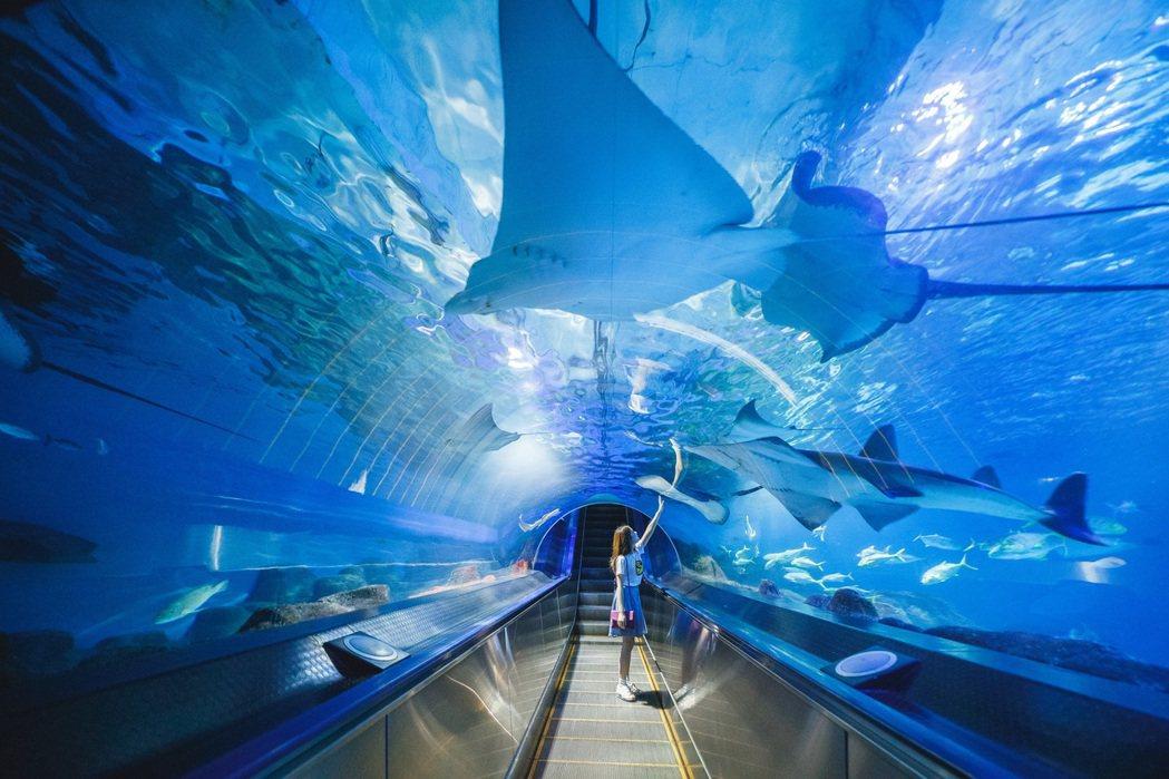 海洋公園海底隧道。業者/提供