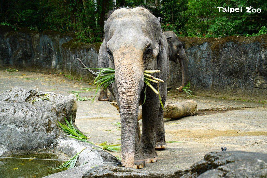 新冠肺炎疫情趨緩,封園77天的動物園終於要在8月1日(日)重新和大家見面。  圖...