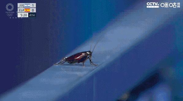 26日,蟑螂闖進了東京奧運會。轉播的導播,還給了這隻蟑螂5秒特寫。(咪咕網)