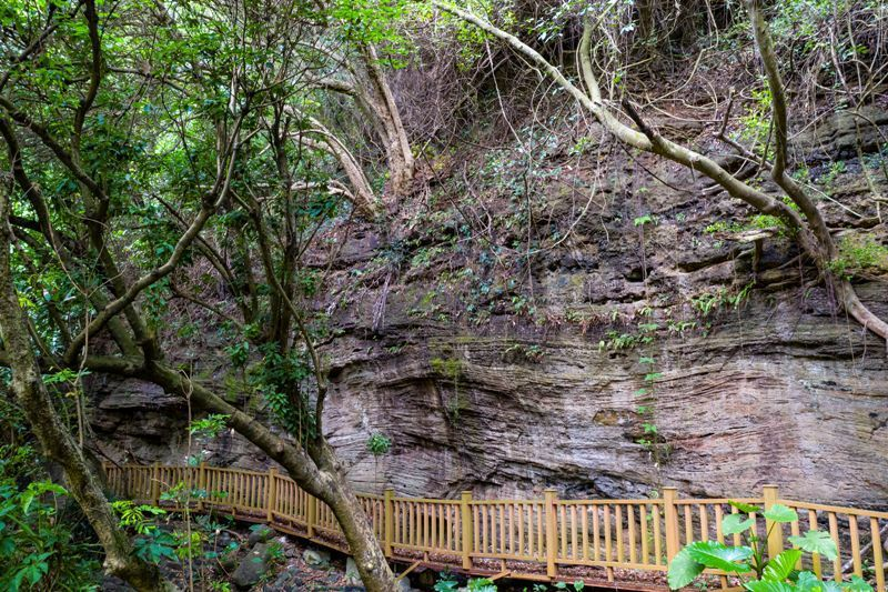 湖光岩觀岩棧道,此處為湧流凝灰岩。圖/本報廣東湛江傳真