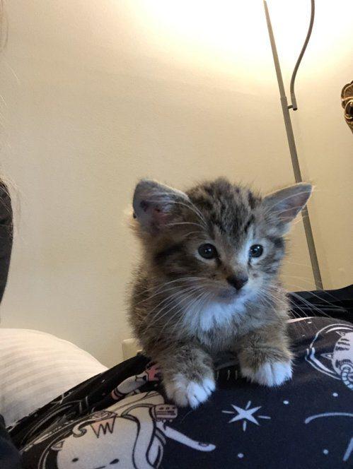 幼貓時期的Aslan。圖/取自推特
