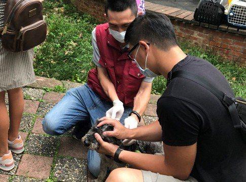 新北動保處於林口立行公園辦理狂犬病疫苗巡迴注射活動。圖/新北動保處提供