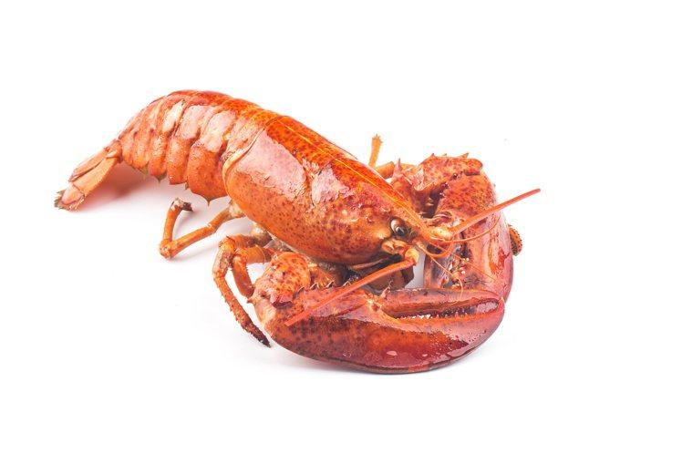 「阿哺吉和牛龍蝦套餐」中,吃得到龍蝦、A5和牛等食材。圖/八色烤肉提供