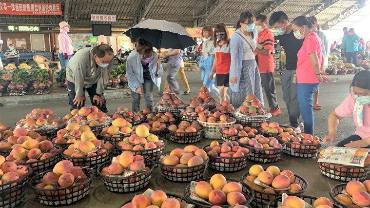 政府宣布微解封,台南玉井青果市場昨天已有不少外縣市遊客前來採買芒果,民眾說疫情趨...
