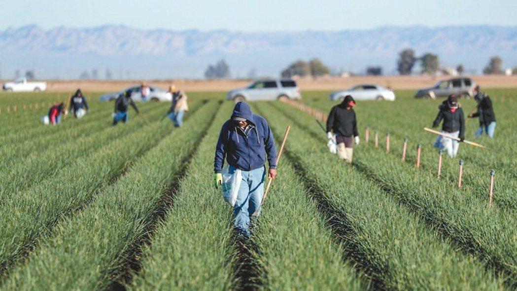 農業及食物永續發展將是下一波高成長題材。(本報系資料庫)