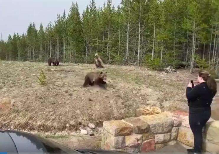 美國一名女子5月中在黃石公園近距離拍攝灰熊,差點遭到灰熊攻擊。截自IG影片