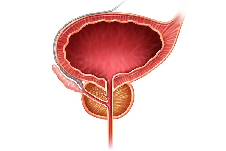 攝護腺位在膀胱出口處、是男性特有器官,隨年紀變長、荷爾蒙日積月累刺激,會逐漸肥大...
