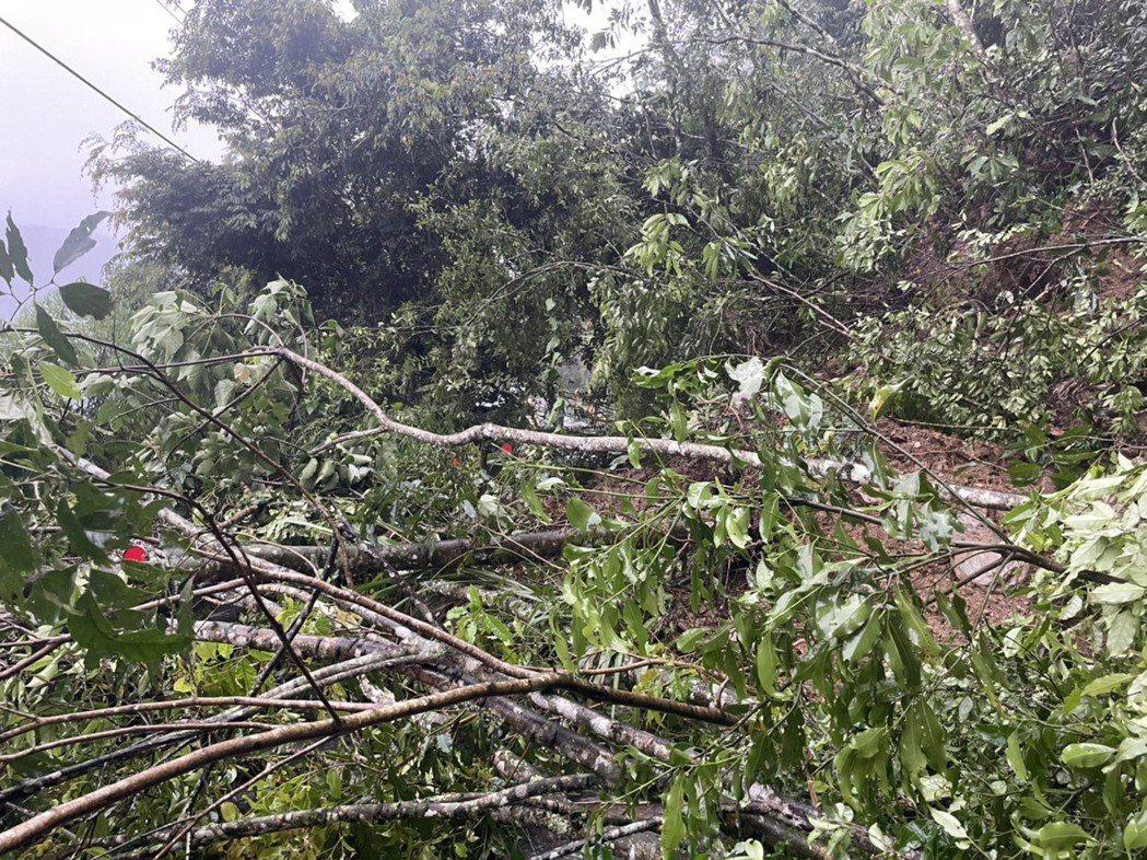 高雄山區雨勢不停歇,寶山快到二集團的藤枝林道道路崩坍嚴重,該道路屬林務局所管,高...